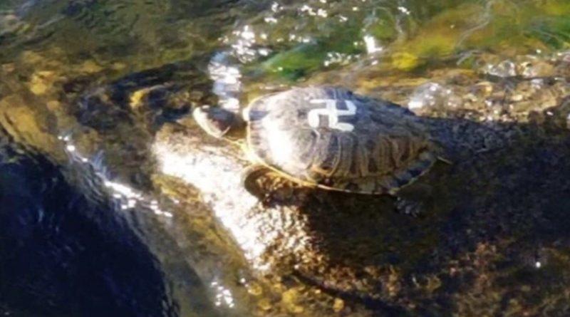 Tartarugas pintadas com suástica em parque americano