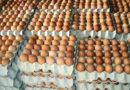 Governo garante que não vão faltar ovos para Pessach