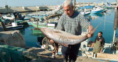 Proibido comercializar peixes do Mediterrâneo