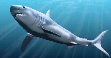 Dentes de tubarão encontrados em Jerusalém