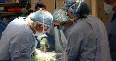 humanos recebem órgãos de animais