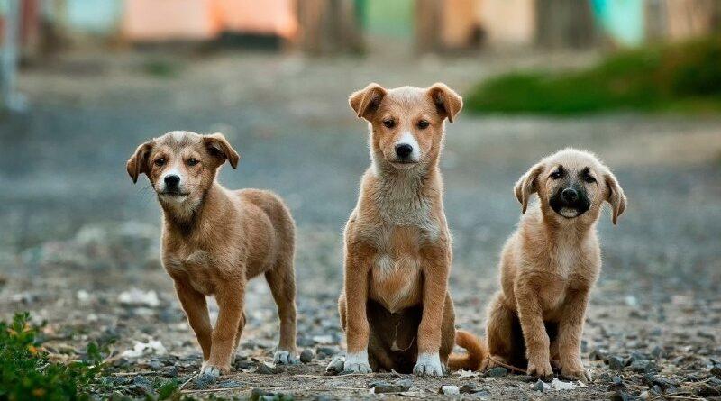 DNA nas fezes de cachorro dará multa