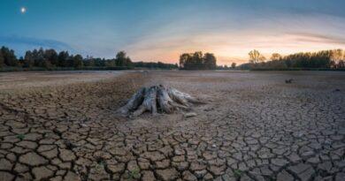 Concurso desertificação Dubai Expo
