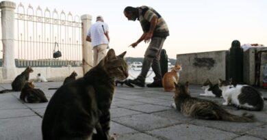 NIS 6 milhões para gatos de rua